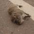 Fauna Atropellada en Rutas Santafesinas (Argentina) icon