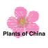 Plants of China icon