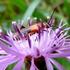 Flowering Plants: Field Trip Species List icon