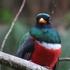 Birds of Caldas icon