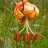 Biodiversity Survey on the Mt. Tamalpais Watershed icon