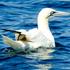 Aves Marinhas de Portugal icon