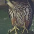 Hurunui Falcon Survey icon