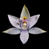 New Zealand Native Orchids icon