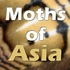 Moths of Asia icon