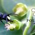 Pollinators in Paradise icon