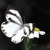 台灣蝴蝶閃電調查 (Butterfly blitz) icon