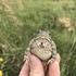 AmphibiansUMRB icon