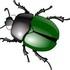 Жуки Республики Мордовия   Beetles of the Republic of Mordovia icon
