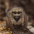 Spiders of Ukraine (Пауки Украины) icon
