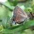 Lepidoptera of Kentucky icon