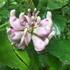 Rare Plants of Kentucky icon