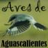 Avifauna del Estado de Aguascalientes icon