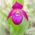 Дикие орхидеи Сибири icon