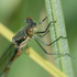 Northwest Territories Odonata icon