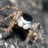 Arachnida of Siberia icon