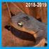 Pacific Newts (Dead, 2018-2019) - Lexington Reservoir icon