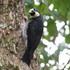 Birds of Quindio icon