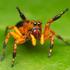 Papa-moscas do Brasil icon