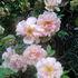 Rose Cottage - Mandala Permaculture Wyndham icon