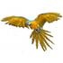 Birds of the World icon
