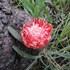 Flora of Zambia icon