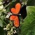 Butterflies of Curitiba icon