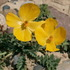 Plants Of Uzbekistan icon