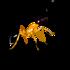 Hormigas de Chile icon