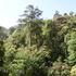Biodiversity of Subtropical Forest in China icon