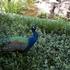 Backyard Birds icon