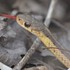Identifying Herpetofauna Road-crossing Hotspots in New York State icon