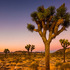Biodiversity of the Mojave Desert icon