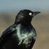 Birds of Napa County icon