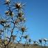Invasive Plants of Marin County Rangelands icon