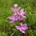 Orchids of Nova Scotia icon