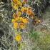 Flora del litoral de la región de Valparaíso, Chile icon