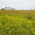 Grasslands National Park Invasive Plant Database icon