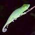 Madagascar Wild icon