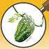 Albert-Eden Pest Quest icon