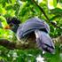 Birds of Uganda icon