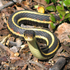 Parks Canada BioBlitz 2019 WBNP - Reptiles and Amphibians icon