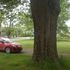 Big Trees of Nova Scotia icon