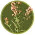Prairie Bush Clover SNA Data icon