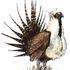 Biodiversity of Fergus County, Montana icon