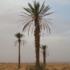 flora of Tunisia icon