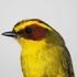 Aves de Hidalgo icon