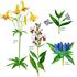 UConn Summer Flora icon