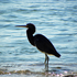 Fauna de Laguna San Ignacio icon