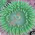 Duxbury Reef BioBlitz 2015 icon